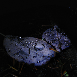 Midnight dew  by Todd Reynolds - Nature Up Close Leaves & Grasses