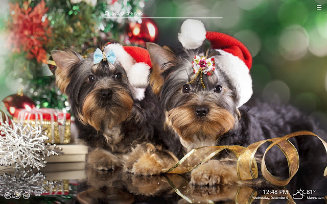 Christmas Puppies.Christmas Puppies Dog Puppy Hd Wallpapers