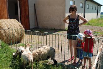 Photo: Zaczynamy od owieczek :D
