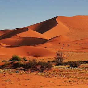 Dunes by Cheryl Korff - Landscapes Deserts ( sossusvlei )