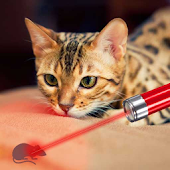 Laser Pointer Simulator Cat