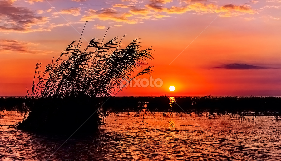 Sunrise in Sulina, Delta&Black Sea by Tomita Savastre - Landscapes Waterscapes ( clouds, reed, sky, sunrise, sun, colours )