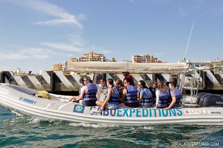 Cabo Expeditions (Best Things to Do in Cabo San Lucas).