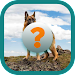 Dogs Quiz Game icon