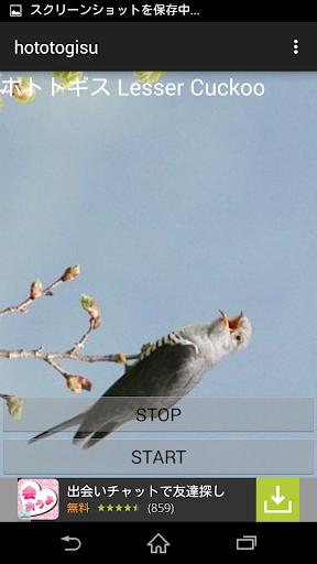 鳥鳴き声ホトトギス
