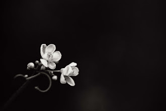 Photo: its been quite dark of late...  #macrophotography  #bwphotography  #monochromeworld +Monochrome World +HQSP Flowers+HQSP Monochrome+FloralFriday #floralfriday +HQSP Macro