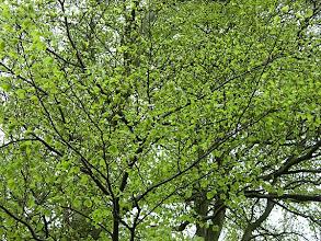 Photo: drzewa wiosenne