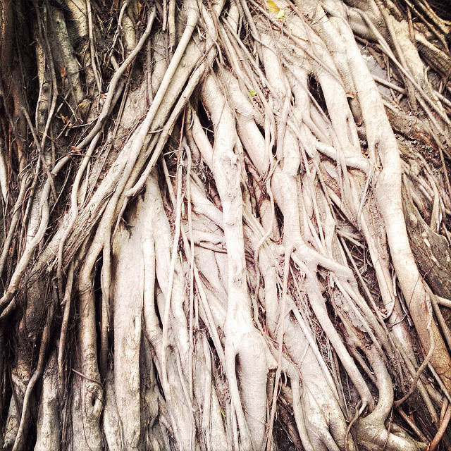 Chinese Banyan, Roots, tree, stone wall tree,  中國, 榕樹, 根, hong kong, forbes, street, kennedy town