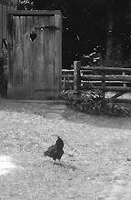 Photo: Dit houten hokje was toen de W.C. De meeste Derpers zeiden vroeger de plee en hadden zo'n hokje in de tuin!