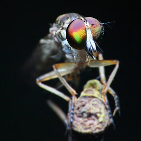 by Hanif Mohamad - Animals Insects & Spiders