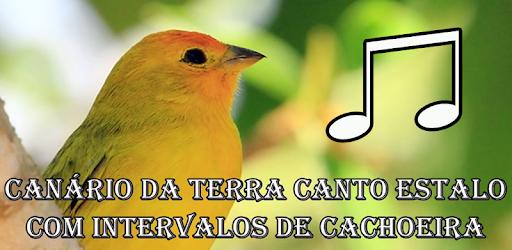 TERRA BAIXAR CD CANTO DE CANARIO DA