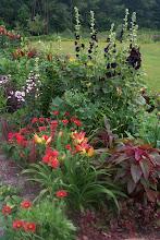 Photo: early July - hollyhocks, daylilies, gaillardia, lilies
