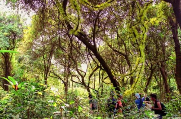Khám phá rừng chõi nguyên sinh khi đi tour cô tô