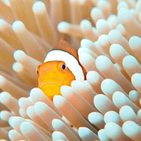 by Bobo Adi - Animals Fish