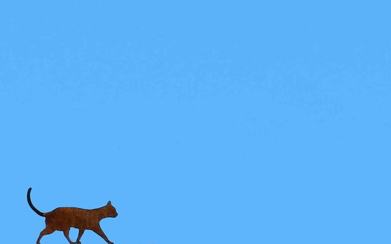 Gatto sul cielo di Cordoba di eljsa88