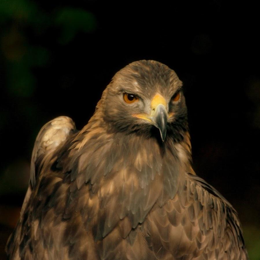 by Steve Tharp - Animals Birds