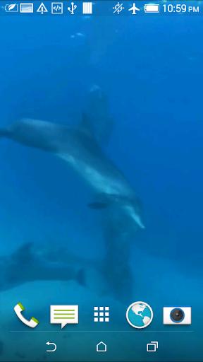 Dolphins 3D Video Wallpaper