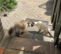 Photo: Makky en Sinjo samen