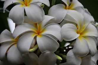 Photo: Flowers.
