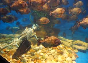 Photo: The aquarium has a sense of humor. A dead body in with the piranhas