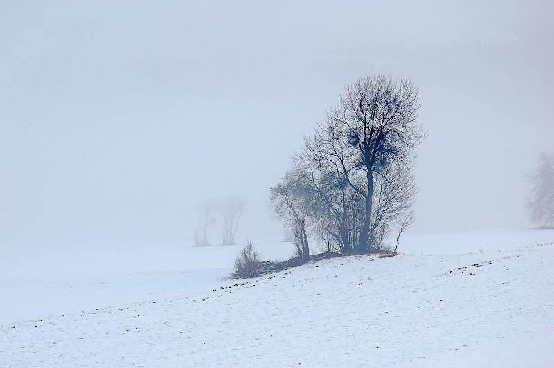 nel bianco di domenicolobinaphoto