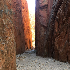 Stanley Chasm Magnificence by Dawn Simpson - Landscapes Caves & Formations ( sunlight, rocks, alice springs, filtered light, tourim, stanley chasm )