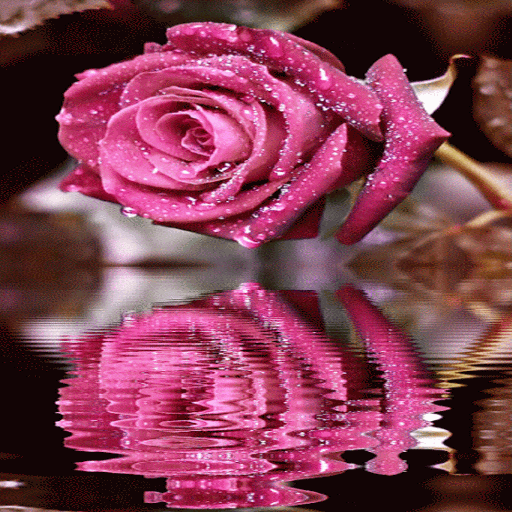 Dewy Pink Reflection LWP