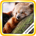 Jigsaw Puzzles: Red Pandas icon