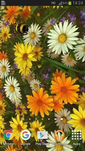 Wild Flowers 3D Live Wallpaper