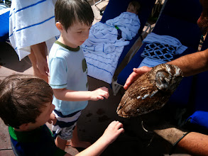 Photo: An Owl at The Kid Pool! #SpringBreak