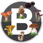 Boletaires Premium: Bolets i Receptes de Catalunya icon