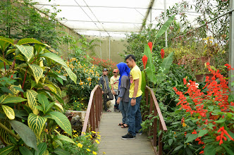 Photo: Butterly and reptile garden