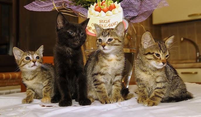 Compleanno tra Gatti di Enrico Balla