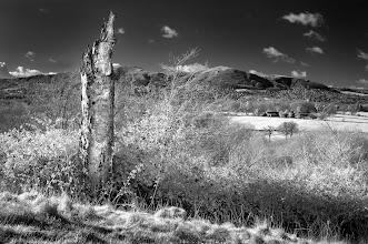 Photo: 'Shattered Sentinel'  (Clive Haynes)