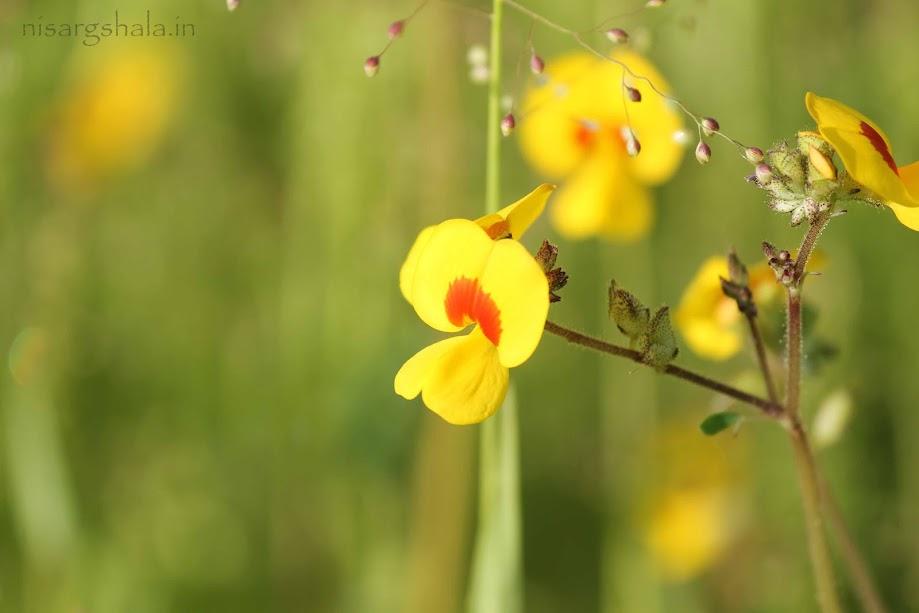 Micky mouse flower