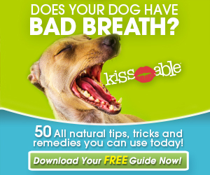 Six Best Ways to Take Care of Your Dog's Teeth   Ruff Ideas