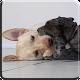 Puppies Video Live Wallpaper