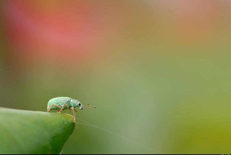 Smeraldo di Claudio Tenca