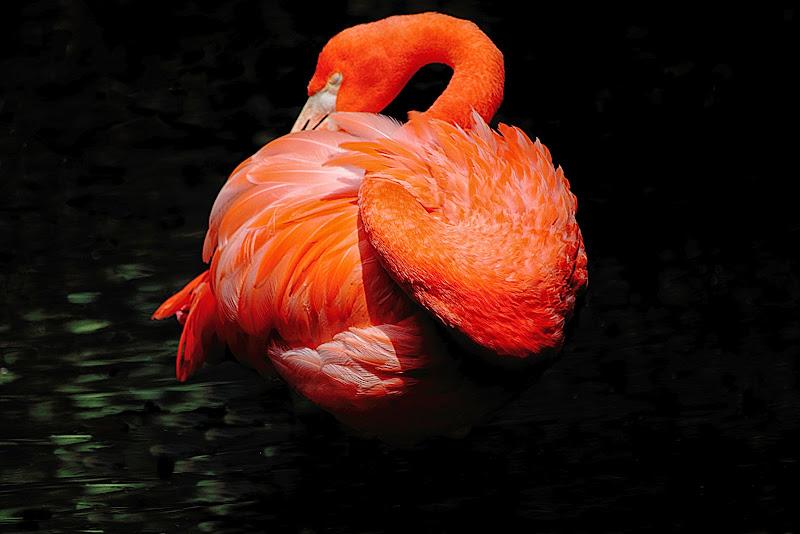 Flamingo di maria cristina pasotti