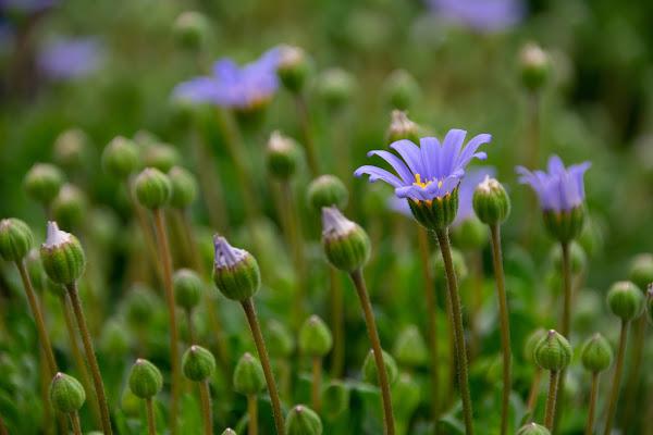 piccoli fiori di marzo di Zerosedici