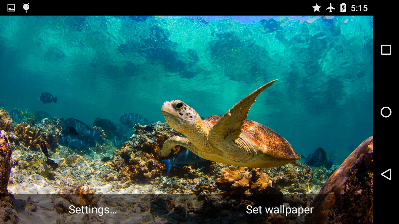 3d underwater wallpaper turtle underwater 3d wallpaper android apps on play 178
