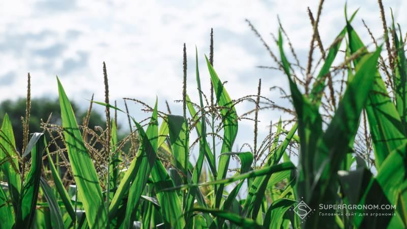 АгроПолігон LNZ Hub: Гарне запилення — надія на високий урожай фото 7 LNZ Group