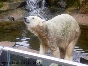 Photo: Eisbaerchen Knut und die fliegende Kokosnuss :-)