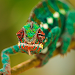 Reptiles and Frogs Wallpapers Icon