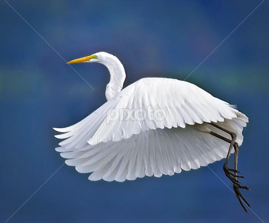 Blue Basin Flight by Don Holland - Animals Birds