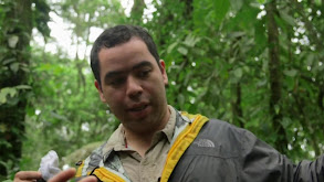 Tortuguero National Park thumbnail