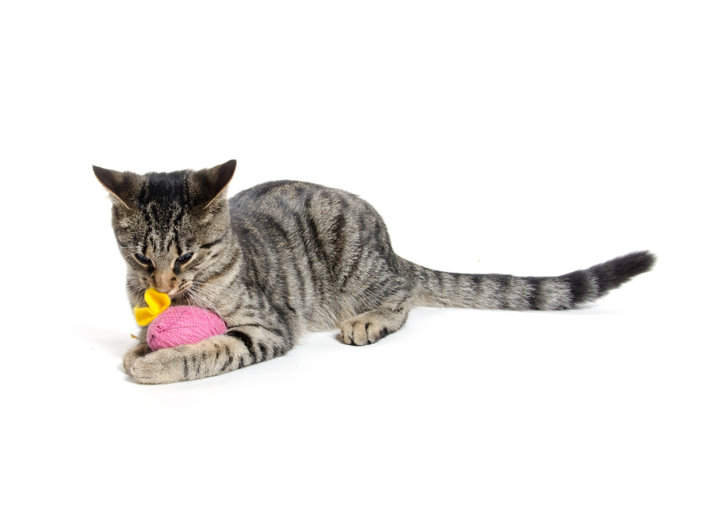 cheap cat toys