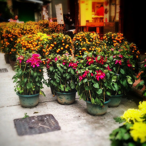 Chinese, New Year, Flower, Market,   中國, 新年, 花市, hong kong, street,  香港, 街