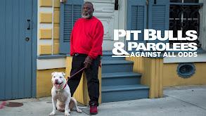 Pit Bulls & Parolees: Against All Odds thumbnail