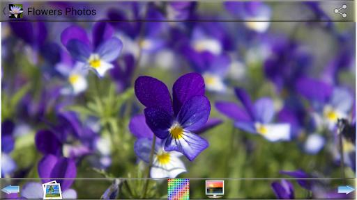 讓Google 日曆行程月曆加農曆顯示在Android 桌面! - 電腦玩物